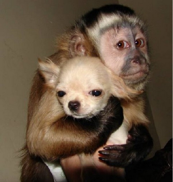 A loving hug-Wonderful Friendship Between Animals