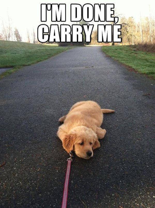 You Remember How Excited She Was When You Say 'Let's Go For a Walk'-15 Images You Can Relate To If You Own A Dog