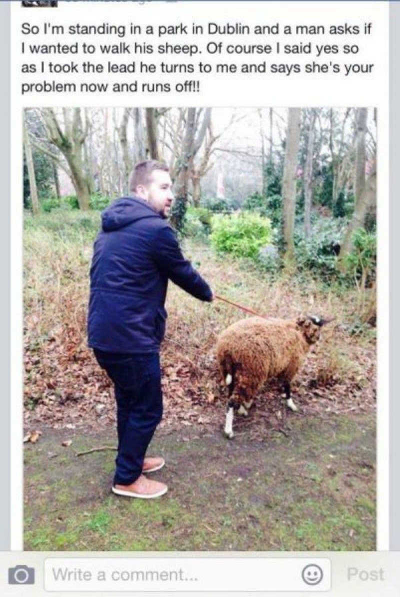 Sheep Problem-15 People Who Just Want To Watch The World Burn