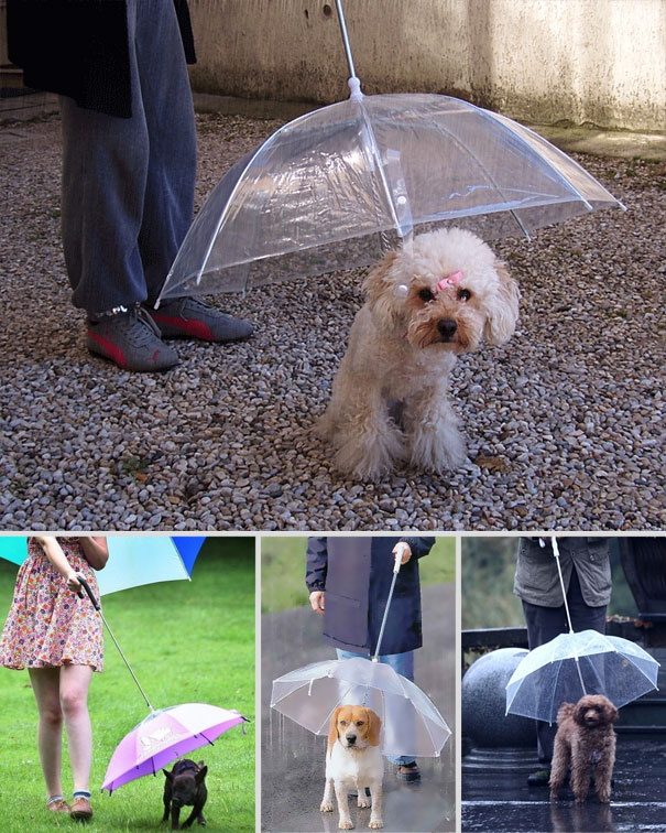 Umbrella for Dogs-15 Awesome Innovations That Simplify Everyday Life