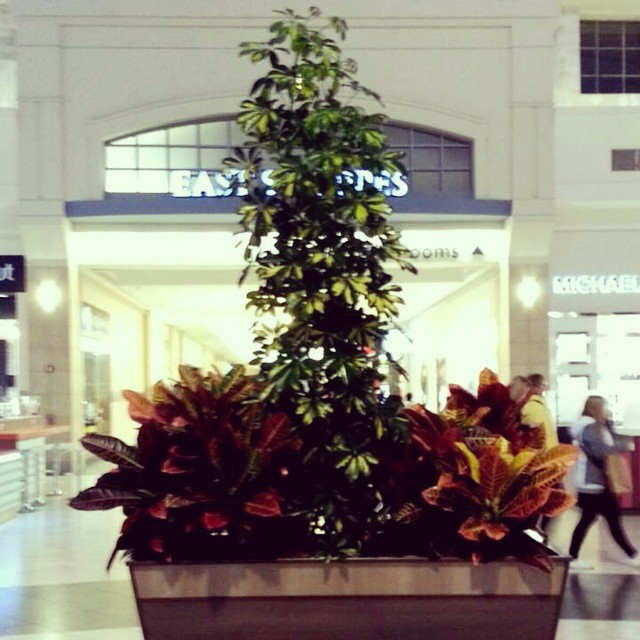 This Decorative Bush that Remind You Something!-15 Mall Fails That Are Hard To Unsee