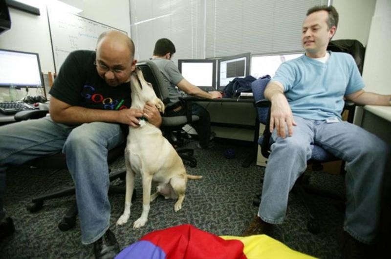Google is a Pet Friendly-15 Amazing Google Employee Perks