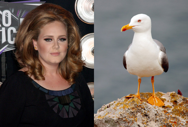 Adele – Fear of Seagulls-15 Celebrities With Weird Phobias