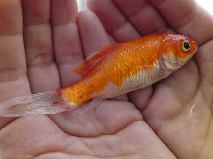 Gold Fish-15 Weird Things Kids Got On Halloween Trick-or-Treat