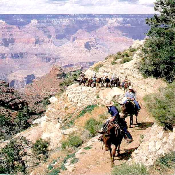 Mule To The Bottom Of The Grand Canyon-Best Bucket List Ideas