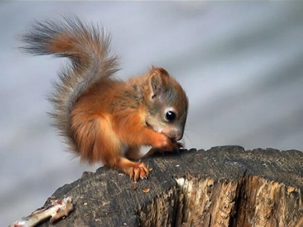 Squirrel-Adorable Baby Animals