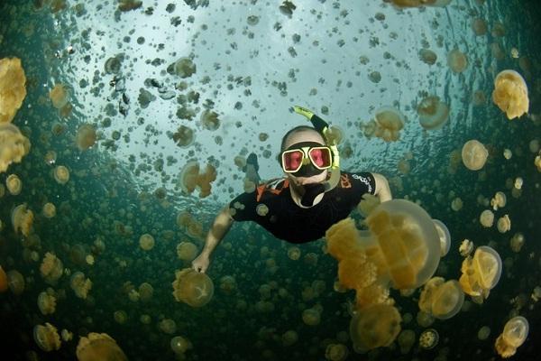Jellyfish Lake, Palau-Most Amazing Lakes On Earth
