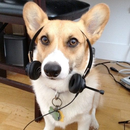 Speak-Cool Things You Can Teach Your Dog Easily