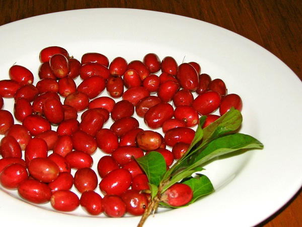 Miracle fruit-Most Popular Exotic Fruits