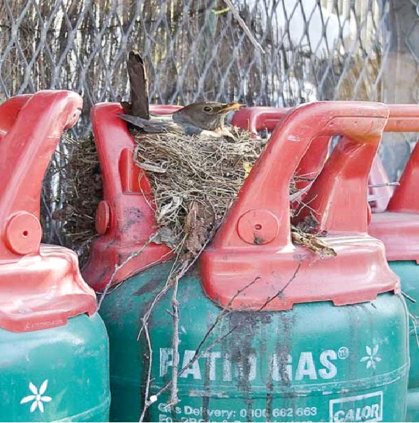 On A Gas Tank-Most Unusual Places For A Bird's Nest