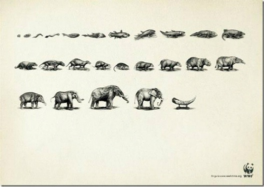 An Elephant Didn't Evolve To Be Your Treasure-24 Creative WWF Ads