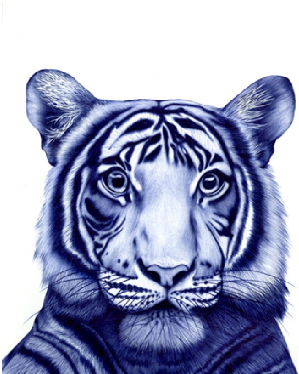 Tiger-Amazing Pen Drawings