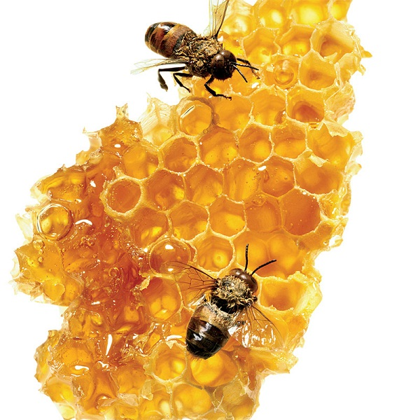 Honey-Foods That Are Going Extinct Thanks To Climate Change