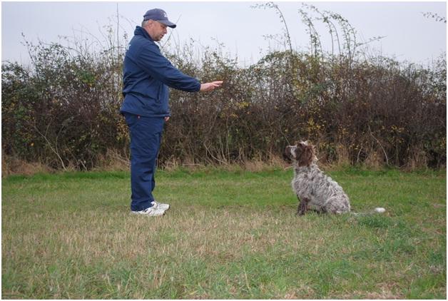 Wait-Essential Dog Training Tips