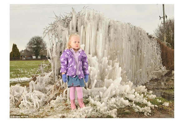 Salhouse - Frozen Hedges-Most Amazing Ice Formations