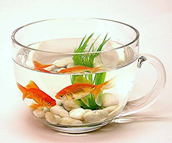 Fish-Best Animals For Pets