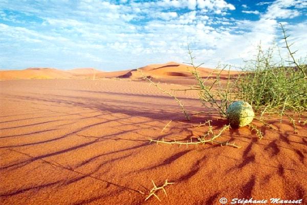 Namib Desert - Namibia-Most Fascinating Deserts