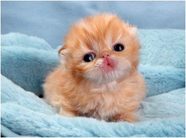 Baby Kitten-Cutest Animals Ever
