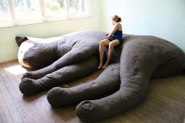 Cat-Most Awesome Couches