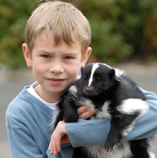 No Skunks As Pets-Weird Laws In Virginia
