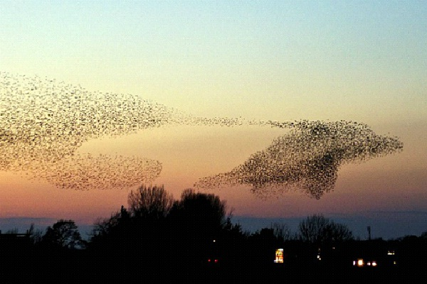 Dolphin-Most Amazing Bird Formations In Sky