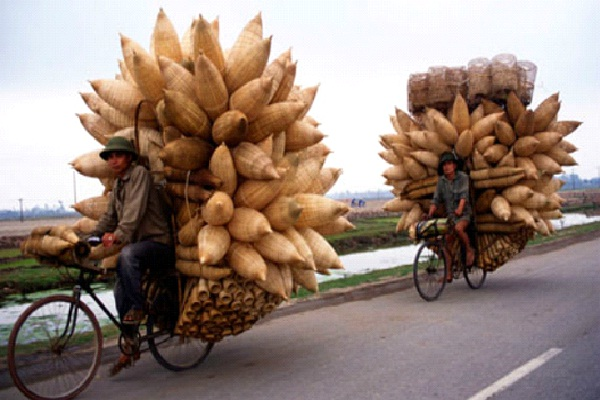 Pineapple-Small Vehicles, Big Loads