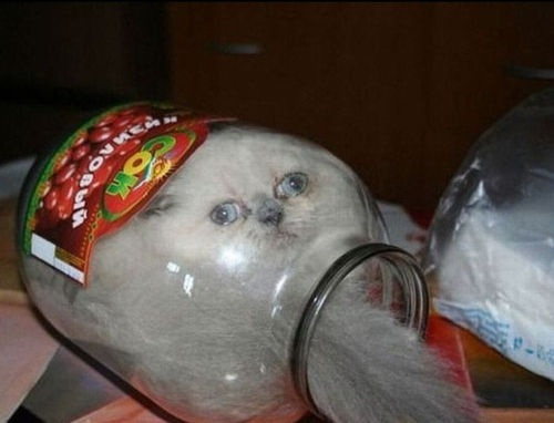 The cat is not happy-Funny Animals Stuck In Objects