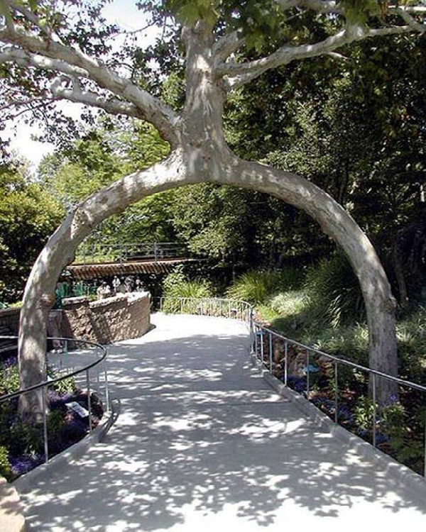 The Arch Tree-Amazing Trees