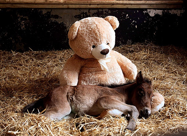 The horse and the bear-Baby Animals With Stuffed Toys