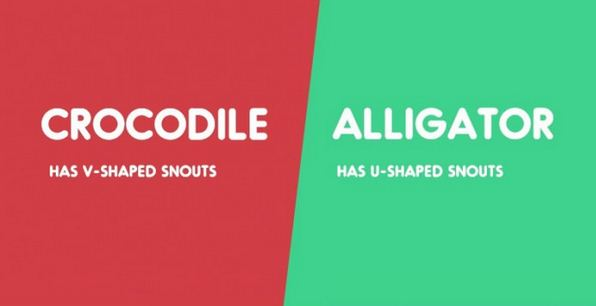 Crocodile vs. Alligator-15 Words That Sound Similar But Have Different Meaning
