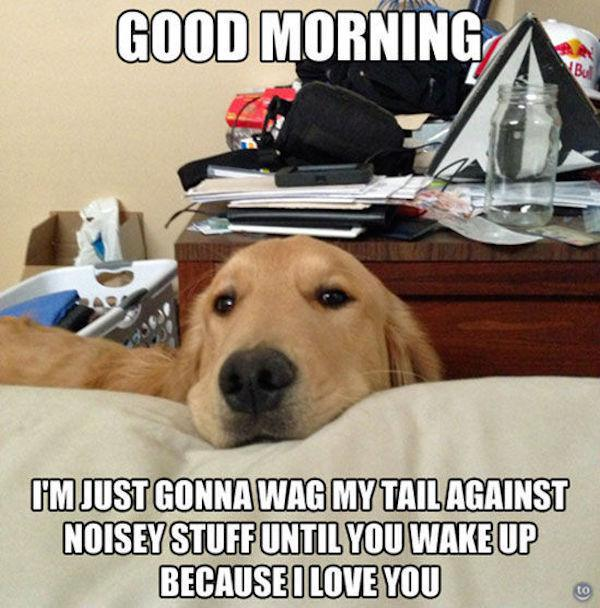 You Don't Need Alarm If You Have a Dog at Home-15 Images You Can Relate To If You Own A Dog