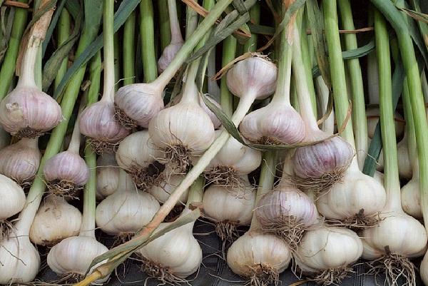 Garlic-Foods That Boost Immunity