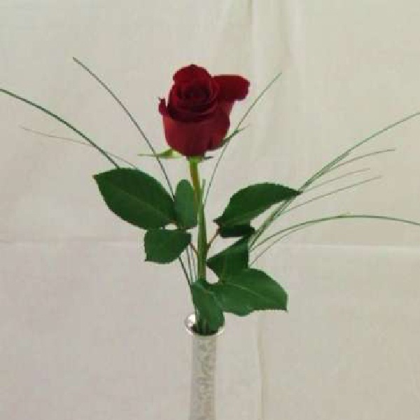 Single Rose-Best Gifts To Give Your Girlfriend