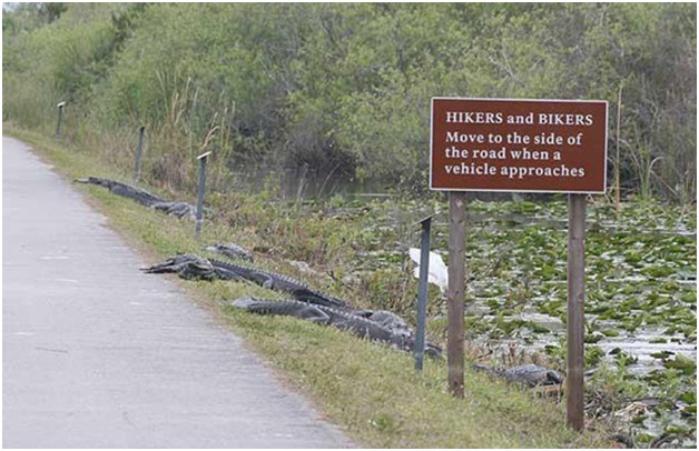 Swerve Over to the Gators-Funniest