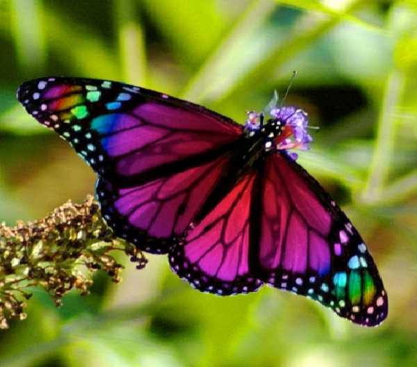 Butterfly Effect-Reasons You Should Never Commit Suicide