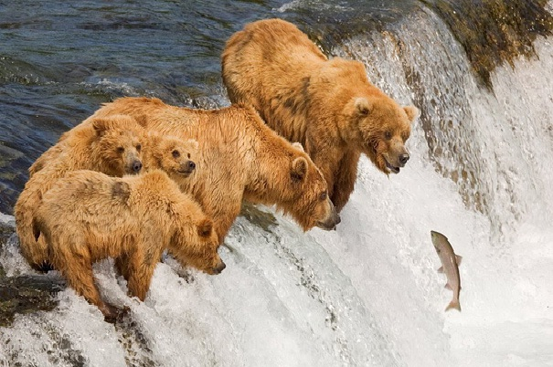 Cliff Hanger-Amazing Perfectly Timed Photos Of Animals
