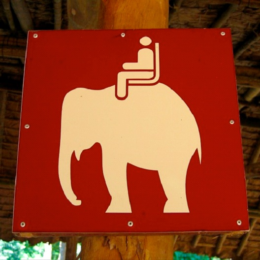 Still Must Pay Meter When Parking An Elephant-Dumbest Laws In Florida