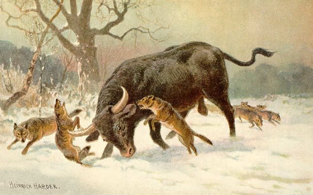 Aurochs-Extinct Animals That Science Could Bring Back From The Dead