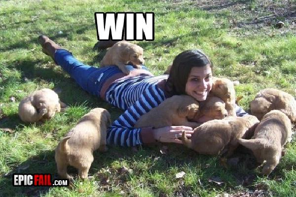 """The dog wins-Hilarious """"win"""" Photos"""