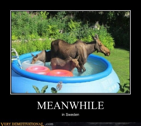 Animals having a bath-Best Meanwhile In Sweden Memes