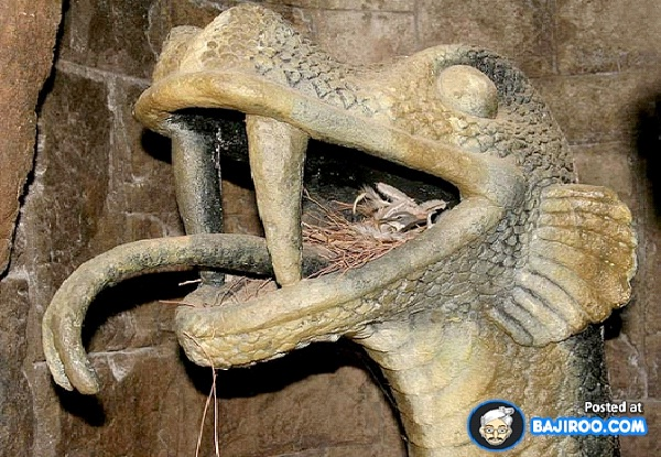 In Dragon Statue-Most Unusual Places For A Bird's Nest