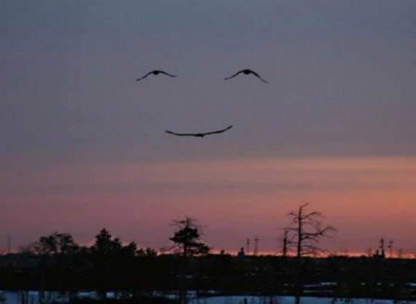 Smiley Face-Most Amazing Bird Formations In Sky