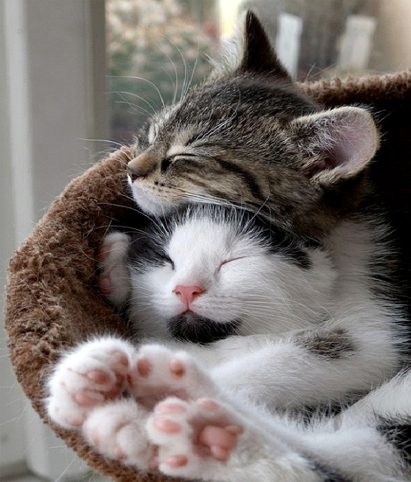 Take A Cat Nap-Tips To Overcome Drowsiness