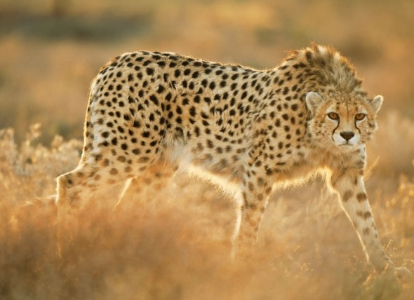 Fast animals-Cool Unknown Facts About South Africa