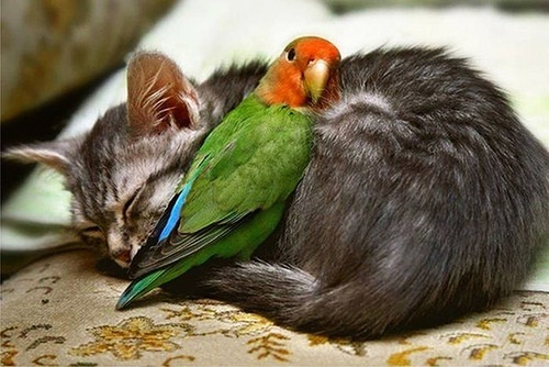 Heh!-Amazing Pics Of Animals Pillowing Each Other
