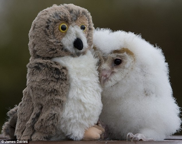 The owl with the owl-Baby Animals With Stuffed Toys