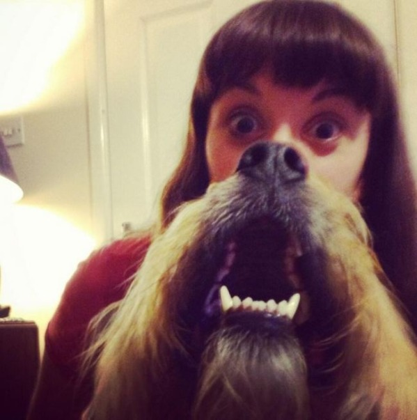 Hilarious dog beard meme...-15 Epic Dog Beards That Will Make You Want To Have One