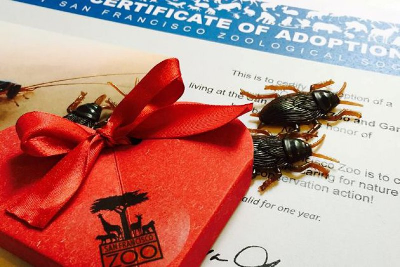 Cockroach Adoption-15 Disgusting Valentine's Day Gifts Ever