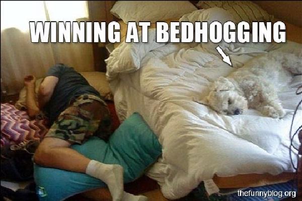 "The dog wins again-Hilarious ""win"" Photos"