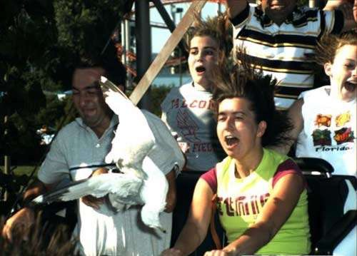 You know You are Too High When..-Hilarious Roller Coaster Moments